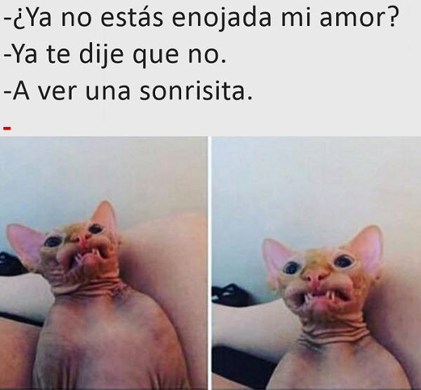 Imágenes graciosas 2017 para whatsapp de amor