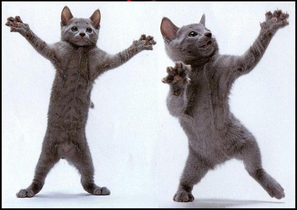 Imágenes graciosas bailando