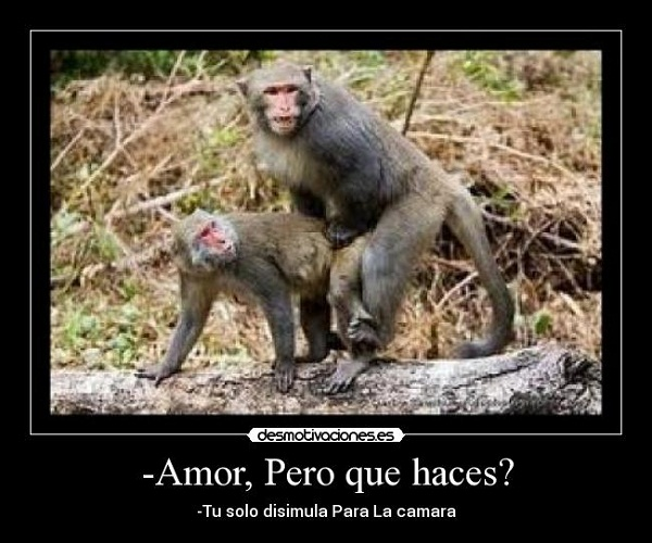 Imágenes graciosas de amor de monos