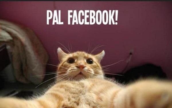 Imágenes graciosas de gatos