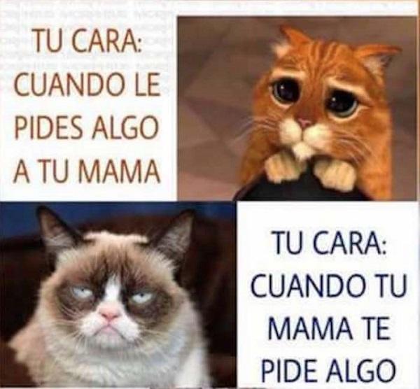 Imágenes graciosas gatos