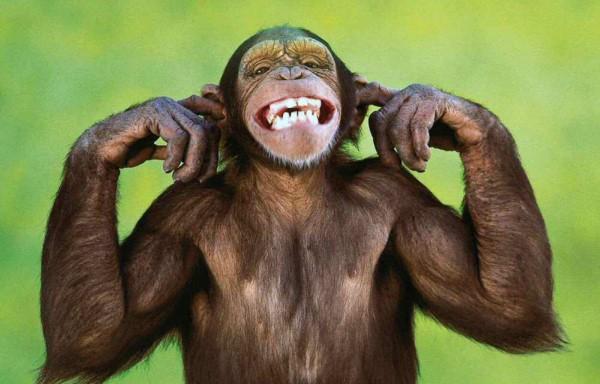 Imágenes graciosas monos