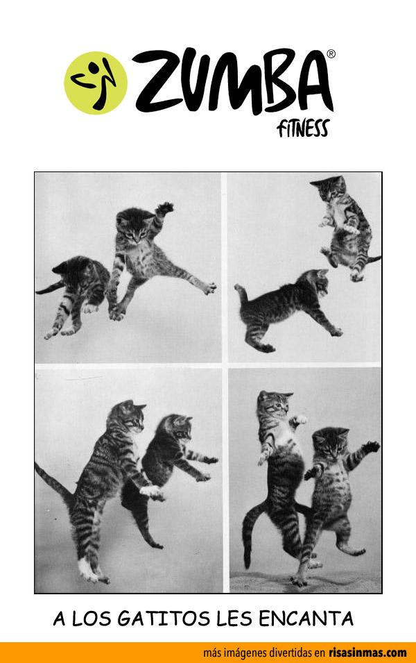 Imágenes graciosas zumba